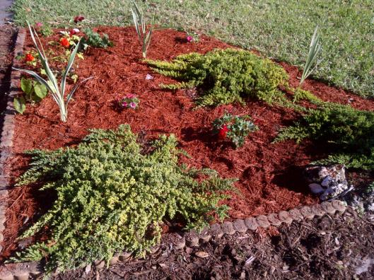 Gardening - After