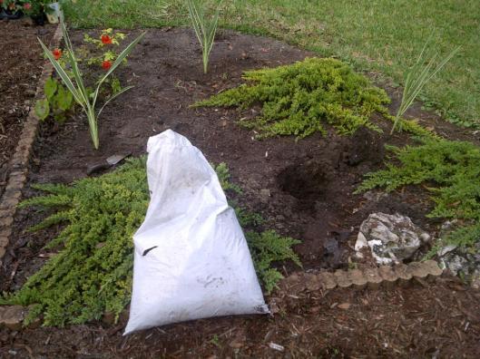 Gardening - Before